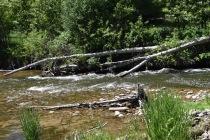 Weber River Rapids
